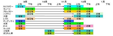 2010下期山下農園作付けと収穫-1.jpg