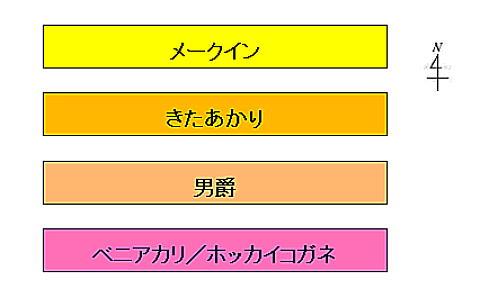 じゃがいもレイアウト2013.jpg