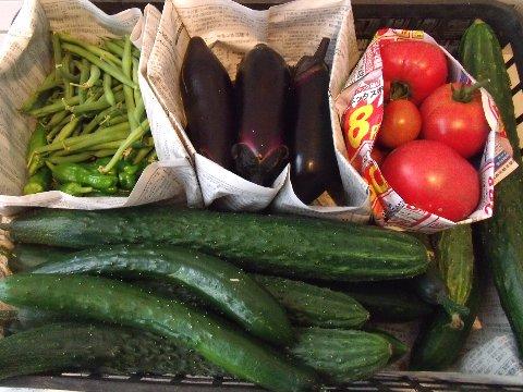 収穫20100626.jpg