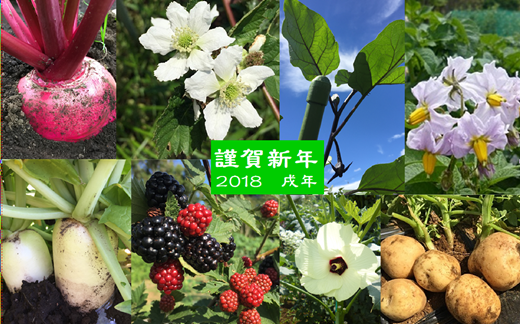 年賀状野菜2018.png