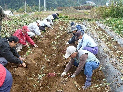 池辺で山下芋掘り.jpg