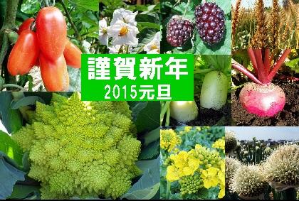 野菜年賀状2015-2.jpg